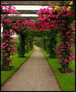 باغهای گل پرویز 1391 (154)