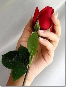 گلهای اصلی پرویز 13911 (56)