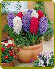 گلهای روی دسکتاب شرکت مارکدار (84)