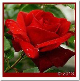 گلهای روی دسکتاب شرکت مارکدار (177)