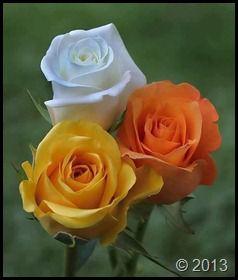 گلهای روی دسکتاب شرکت مارکدار (49)