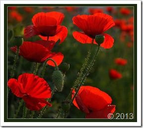 گلهای اصلی پرویز13915 (1606)