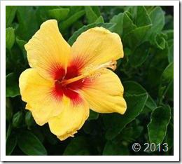 گل (2)