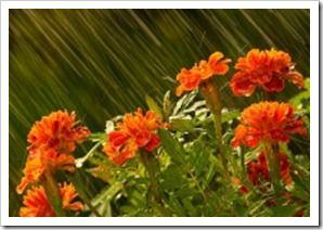 باران پرویز (132)