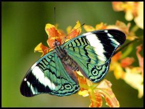 پروانه های زیبا (25)