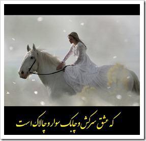 اسب واسب سوار (1)
