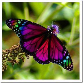 پروانه های پرویز (6)