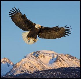 عقاب پرویز 1391 (68)