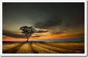 تک درخت (2)