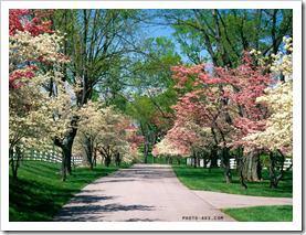 spring-park
