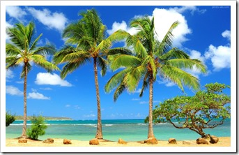 palm-tree-wallpapers-hd