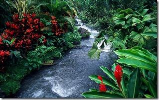 Riachuelo, vegetación y flores cerca del Parque Nacional del Volcán Arenal, Alajuela, Costa Rica (Stream, foliage and flowers near Arenal Volcano National Park, Alajuela, Costa Rica)