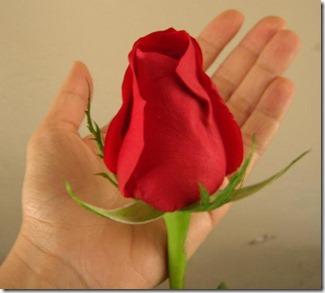 گلهای اصلی پرویز13915 (511)