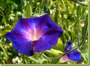 گلهای روی دسکتاب شرکت مارکدار (146)